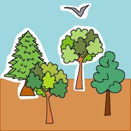 21 De Marzo Dia Internacional De Los Bosques